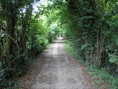 The lane through the woods to Charing Hill